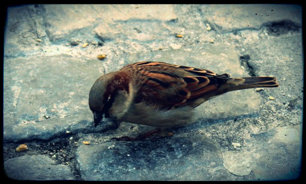 A little sparrow in the city